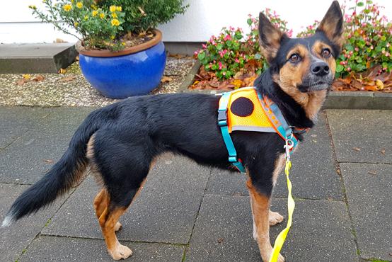 Rettungshunde-Vorschule